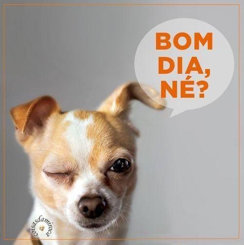Populares Bom Dia!(98) SB62